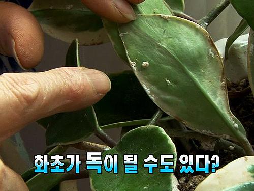 집 안에서 키우는 화초, 잘못 키우면 독?!