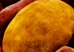 비만 막는 착한 지방? 갈색 지방 만들기!