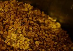 남다른 효능으로 건강을 되찾아주는 녹차 씨앗