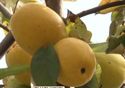 중년 여성을 더욱 아름답게 만드는 식품