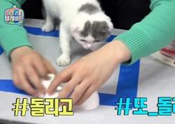 """이홍기, 반려묘 쩔셈 영리한 매력 '눈길'...  """"주인 닮았어"""""""