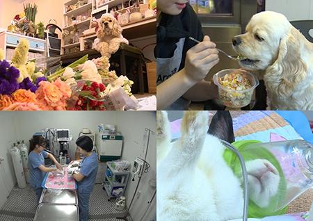 <하하랜드> 깐깐한 꽃집 강아지 '히든이'와 특수동물병원의 일상 공개