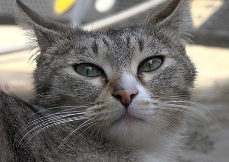 '하하랜드2' 어느 날 갑자기 집에 들이닥친 동물들? 심쿵 유발 불청객들