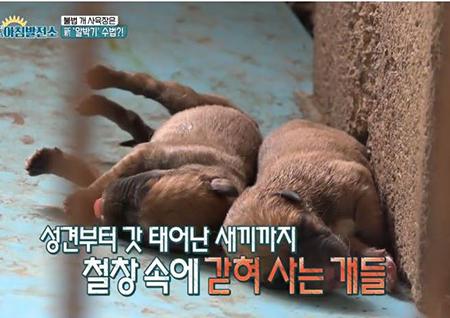'아침발전소' 참혹한 불법 개사육장 실태 공개...안타까움 토로