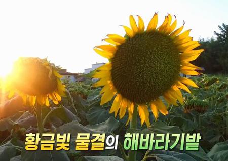 경남 함안으로 떠나는 '꽃길 피서'