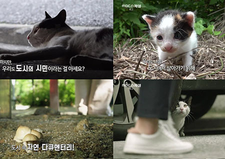 'MBC스페셜' 길고양이들의 도시 생존기… '도시X자연다큐멘터리 고냥이' 방송
