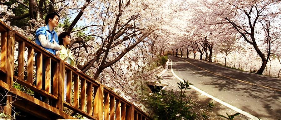 [소소(所所)한 그곳] 봄날엔 이곳이죠! '로망스 다리'가 있는 추억의 벚꽃명소