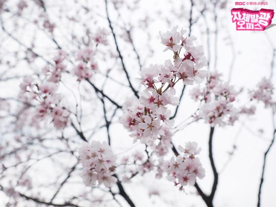 [포토] 여기는 촬영현장! <자체발광 오피스> 배우들, 쉬는 시간 속 '벚꽃은 거들뿐!'