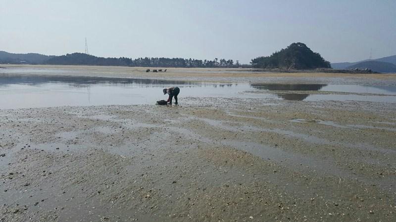 <리얼스토리 눈> 바지락 섬마을, 충남 서산 고파도 사람들 이야기