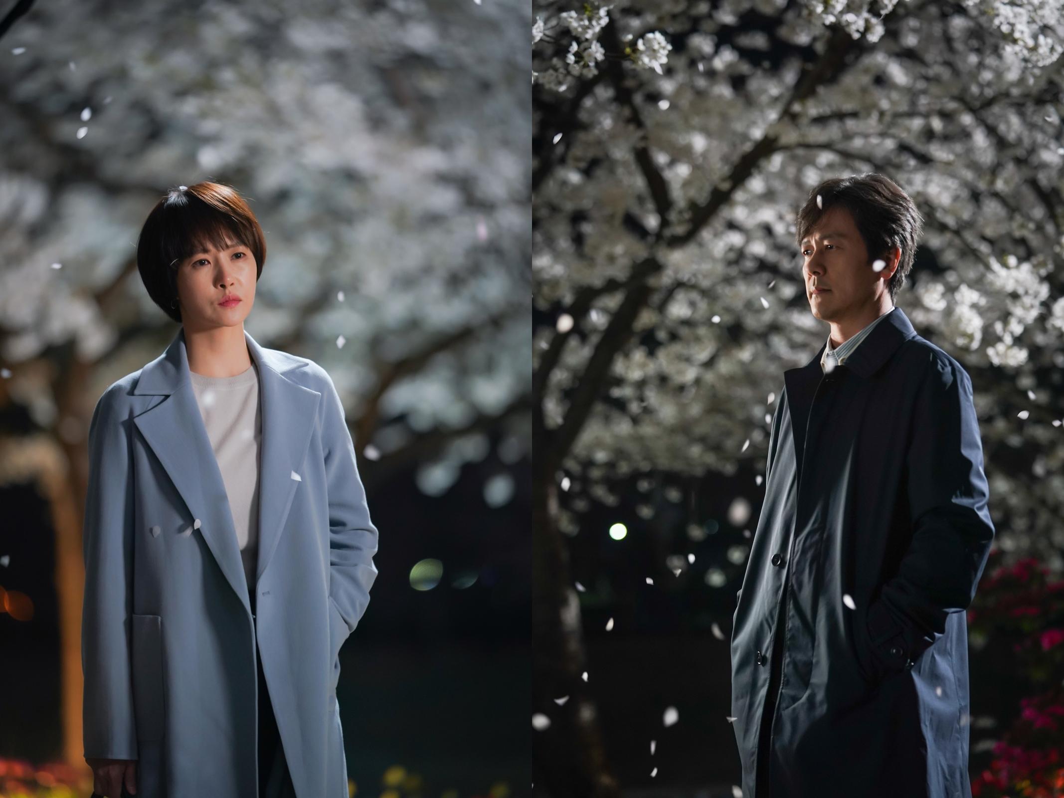 """'키스 먼저 할까요' 감우성X김선아, 필 때도 질 때도 예쁜 사랑 """"벚꽃 같다"""""""