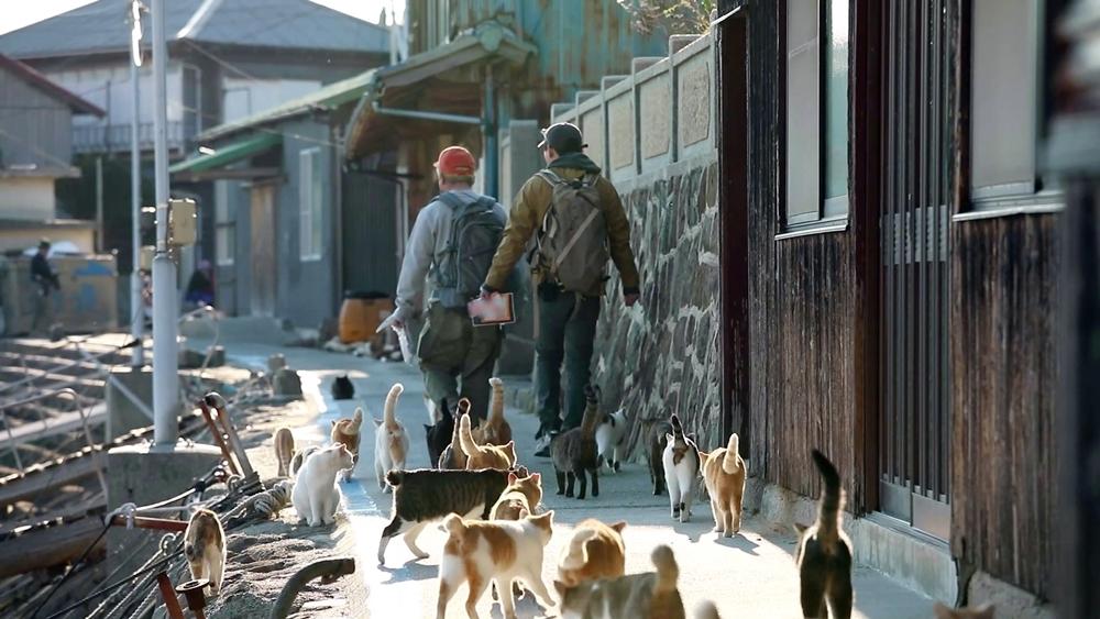 유병재, 끝없는 고양이 행렬에 '피리 부는 사나이' 등극! '묘심저격'